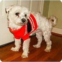 Adopt A Pet :: Conrad - Mooy, AL