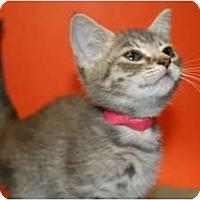 Adopt A Pet :: DORA - SILVER SPRING, MD