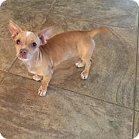 Adopt A Pet :: Charlie - Tustin, CA
