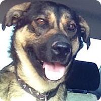 Adopt A Pet :: Suzy - Saskatoon, SK