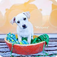 Adopt A Pet :: Wynonna Judd - Shawnee Mission, KS