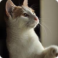 Adopt A Pet :: Rowan - Mount Laurel, NJ