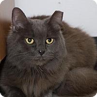 Adopt A Pet :: Gracie - Philadelphia, PA