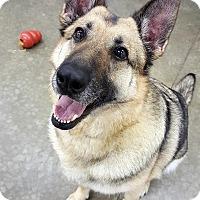 Adopt A Pet :: Ginger - Lake Odessa, MI