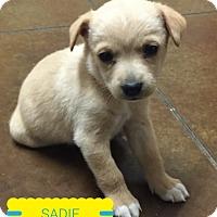 Adopt A Pet :: Abby, Sadie, and Jessi - Cranford, NJ