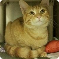 Adopt A Pet :: B-3 J.J. - Triadelphia, WV