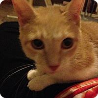 Adopt A Pet :: Willow - Tampa, FL