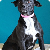 Adopt A Pet :: Betty - Waldorf, MD