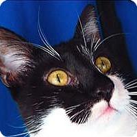 Adopt A Pet :: Nylah - Sherwood, OR