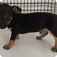 Adopt A Pet :: Dahli#5M - Orlando, FL