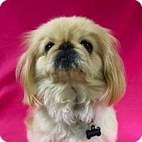 Adopt A Pet :: Velma Louise - Alta Loma, CA