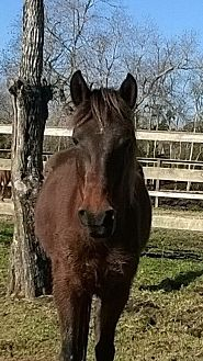 Quarterhorse Mix for adoption in Hitchcock, Texas - Gina