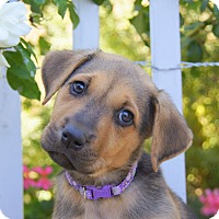 Adopt A Pet :: Elle von Portia - Thousand Oaks, CA
