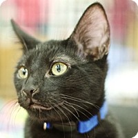 Adopt A Pet :: George - Great Falls, MT