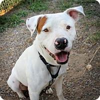 Adopt A Pet :: Denver(BAC) - Von Ormy, TX