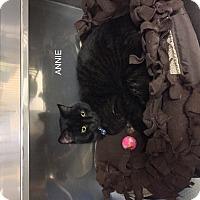 Adopt A Pet :: Annie - Hibbing, MN