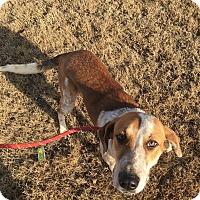 Adopt A Pet :: Rhonda - Macomb, IL