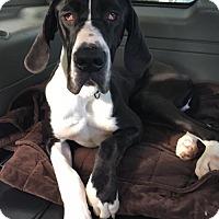 Adopt A Pet :: Booker - Huntersville, NC