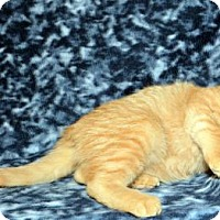 Adopt A Pet :: Sunkist - Salt Lake City, UT