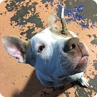Adopt A Pet :: Scarlett Jean - Conroe, TX