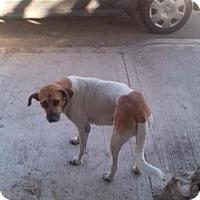 Mixed Breed (Medium)/Shepherd (Unknown Type) Mix Dog for adoption in Toronto, Ontario - COLAS