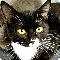 Adopt A Pet :: J.T. - Paducah, KY