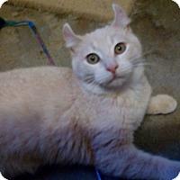 Adopt A Pet :: Fawn - Hammond, LA