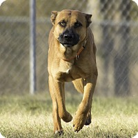 Adopt A Pet :: Gibson - Warner Robins, GA
