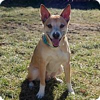 Adopt A Pet :: Happy - Grand Rapids, MI