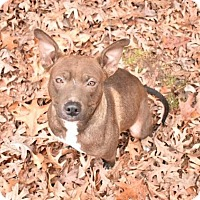 Adopt A Pet :: LucyLou - McKenzie, TN