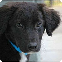 Adopt A Pet :: Brandon - Denver, CO