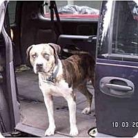 Adopt A Pet :: Boone - Graham, WA