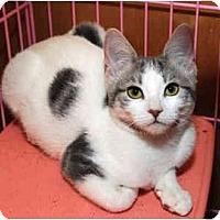 Adopt A Pet :: Venus - Farmingdale, NY