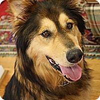 Adopt A Pet :: Kia Sereta - Hagerstown, MD