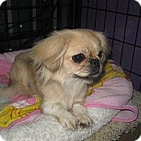 Adopt A Pet :: Sasha - Tumwater, WA