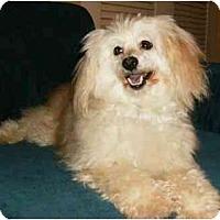 Adopt A Pet :: Barney - Mooy, AL