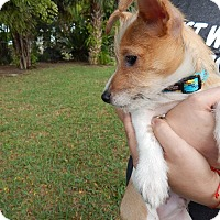 Adopt A Pet :: Nathan - Miami, FL