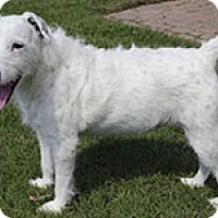Adopt A Pet :: Winnie In Dallas - Dallas/Ft. Worth, TX