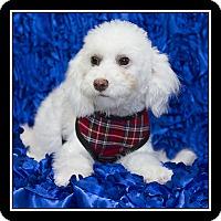 Adopt A Pet :: Mason - San Diego, CA