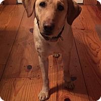 Adopt A Pet :: Danielle - Portland, ME