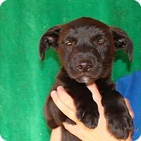 Adopt A Pet :: Rambo - Oviedo, FL