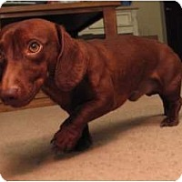 Adopt A Pet :: Oscar - Forest Ranch, CA