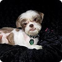 Adopt A Pet :: Pudgy Clark - Urbana, OH