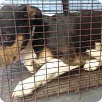 Basset Hound Mix Dog for adoption in San Bernardino, California - URGENT on 11/12 SAN BERNARDINO