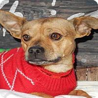 Adopt A Pet :: BROWNIE - Upland, CA
