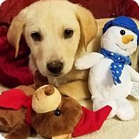 Adopt A Pet :: Piff (James MD-DE) - Newark, DE