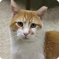Adopt A Pet :: Prince - Medina, OH