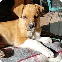 Adopt A Pet :: Java - Littleton, CO