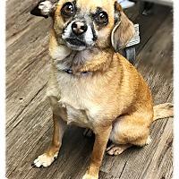 Adopt A Pet :: Little John AKA Oliver - Los Alamitos, CA