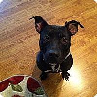 Adopt A Pet :: Riggs- What A Story! - Shavertown, PA
